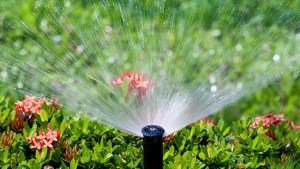 Tips To Save Water In The Garden